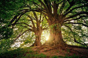 Store trær